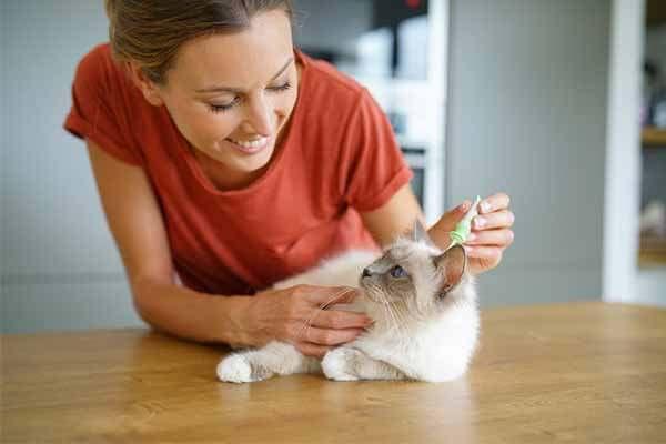 Femme administrant une pipette anti-parasitaire à son chat