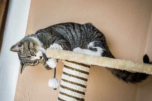 Chat jouant avec un pompon