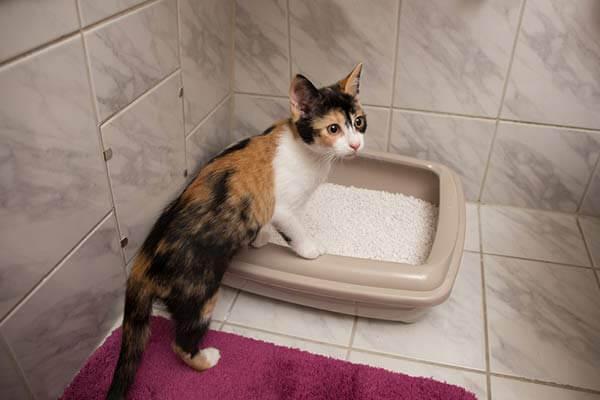 Chat ayant ses pattes avant dans un bac à litière dans la salle de bain
