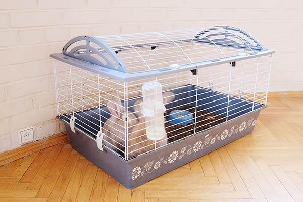 Lapins dans une cage