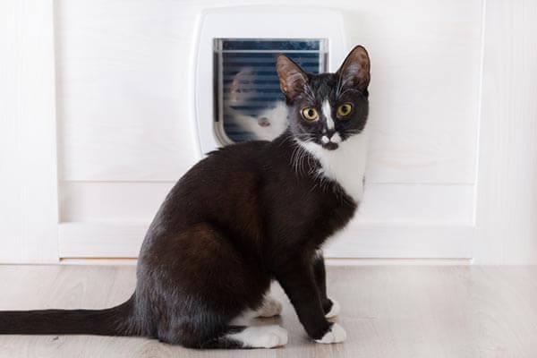 Chat assis devant une chatière installée sur une porte