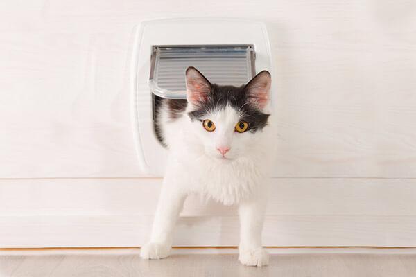 Chat noir et blanc passant dans une chatière
