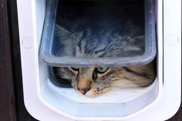 Chat passant sa tête dans une chatière