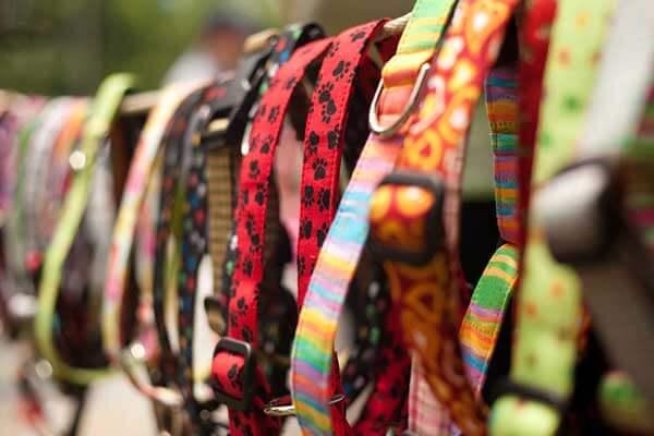 Colliers colorés pour chien suspendus