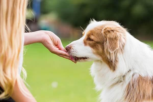 Une femme donne une friandises à son chien