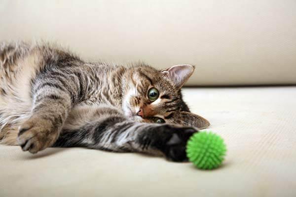 Chat allongé jouant avec une balle verte