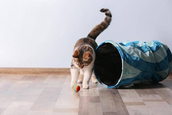 Chat jouant avec une balle à côté d'un tunnel pour chat