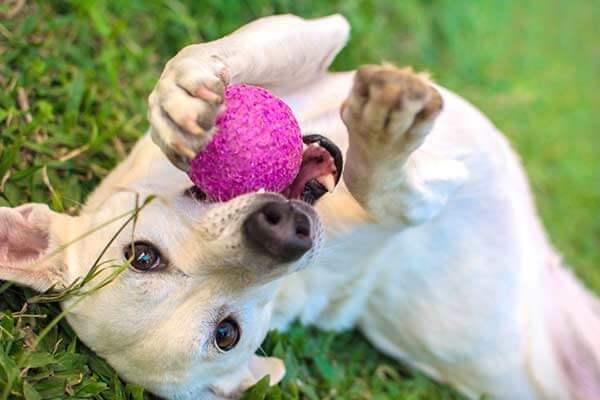 Chien jouant avec une balle rose