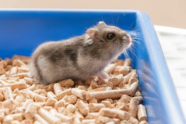 Hamster nain dans un bac à litière agrémenté de pellets