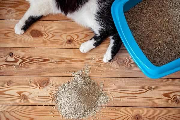 Chat allongé à côté d'un bac à litière et d'un tas de litière