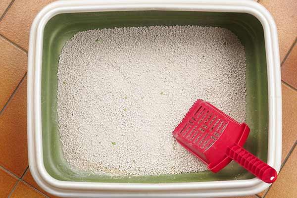 Litière minérale dans un bac à litière