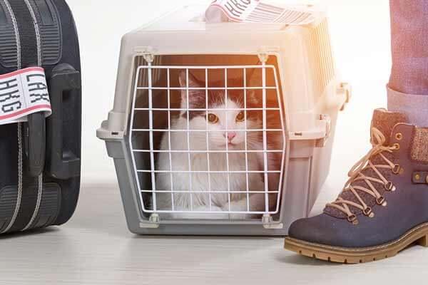 Chat dans une caisse de transport pour l'avion