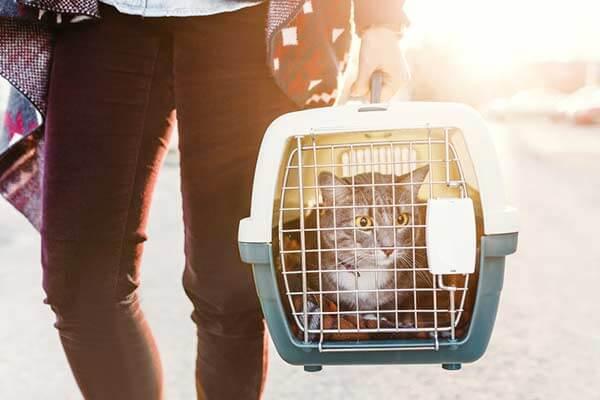 Chat porté par son maître dans une caisse de transport