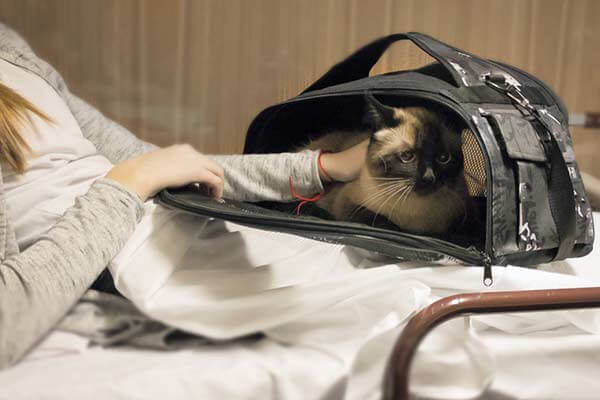 Femme caressant un chat dans un sac de transport