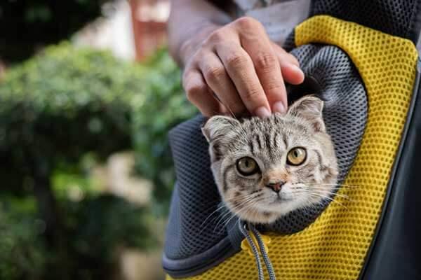 Chat dans un sac à dos jaune