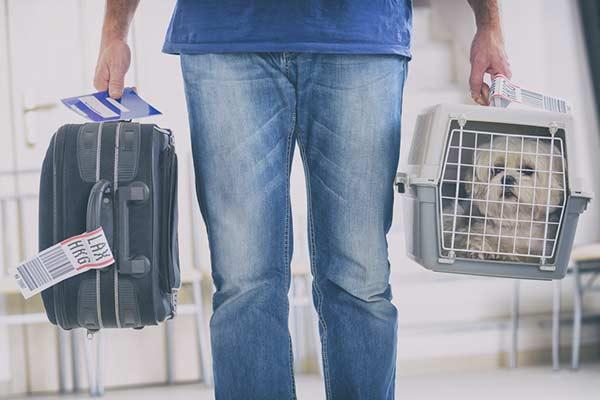 Chien porté dans une caisse de transport à l'aéroport