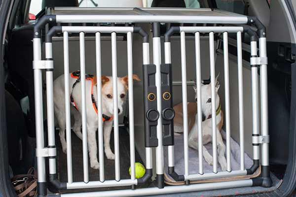 Deux chiens dans une cage de transport installée dans un coffre
