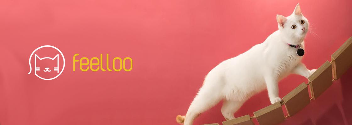 Une start-up rennaise crée le premier médaillon intelligent des chats