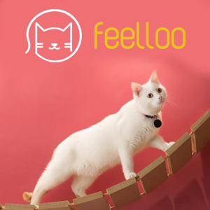 Une start-up rennaise crée le premier médaillon intelligent des chats