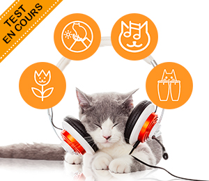 Test Catsonics