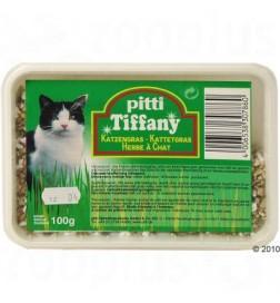 Herbe à chat Pitti en barquette