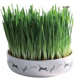 Gamelle en céramique avec herbe à chat