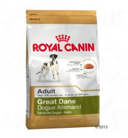Breed Great Dane Adult