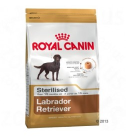 Breed Labrador Retriever Adult Sterilised