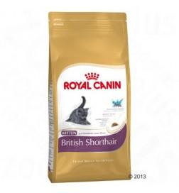 Breed Nutrition Kitten British Shorthair