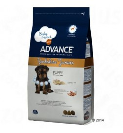 Advance Breed Yorkshire Terrier Junior