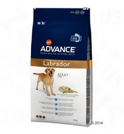 Breed Labrador Adult