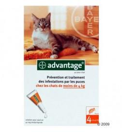 Antiparasitaire Advantage pour chat