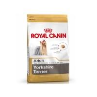 Yorkshire Terrier Adulte 28