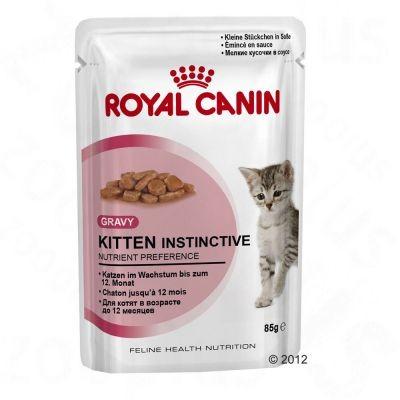 Kitten Instinctive en sauce