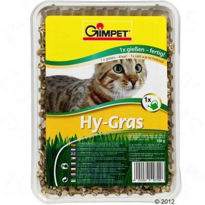 Herbe à chat Hy-Gras