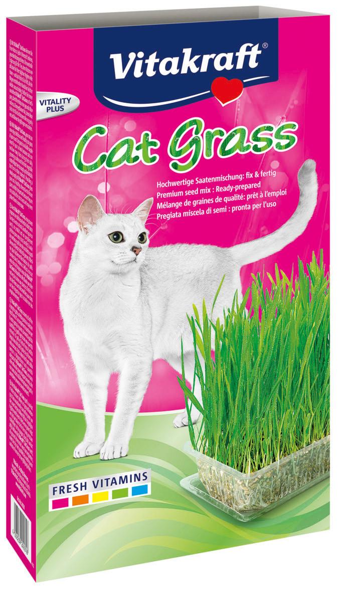 Herbe à chat Cat-Gras