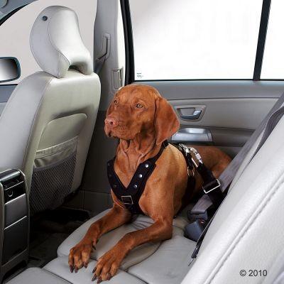 Ceinture de sécurité Easy Comfort pour chien