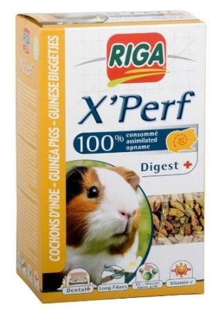 X'Perf Cochon d'inde