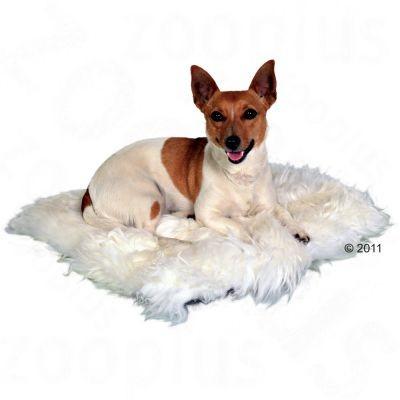 Coussin en peau de mouton pour chien