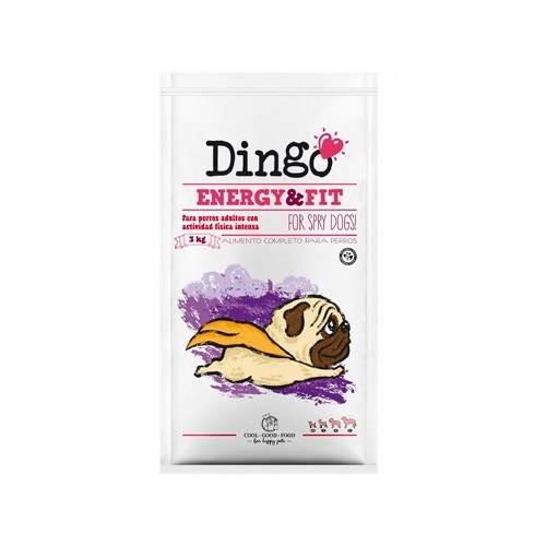 Dingo Energy et fit