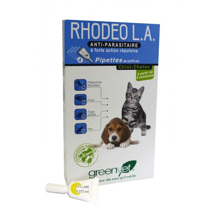 Rhodeo L.A. chiot et chaton