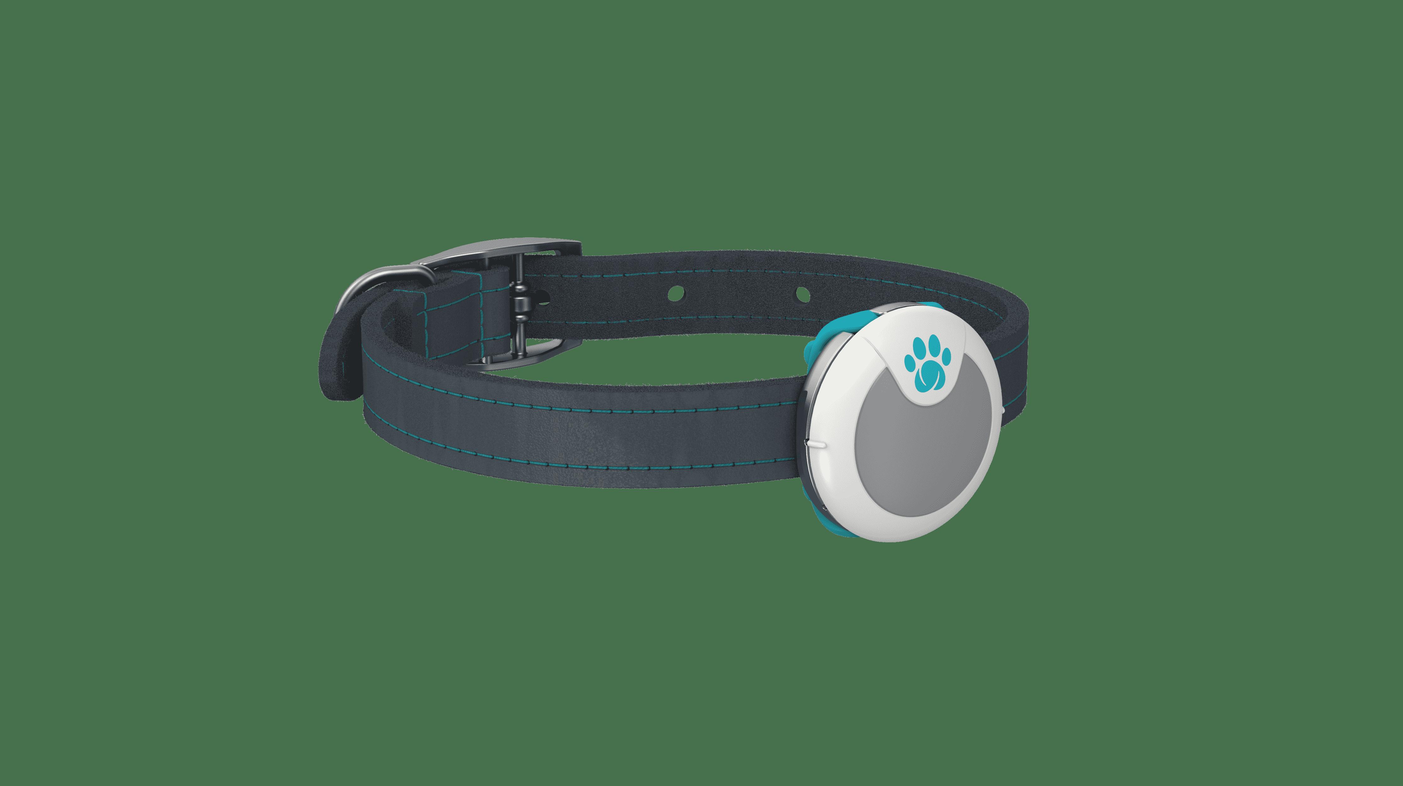Animo - Traqueur d'activités et de comportement pour chiens
